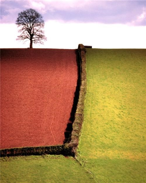 england,europe,field,fields,getaways,green,red,serene,tree,UK,united kingdom