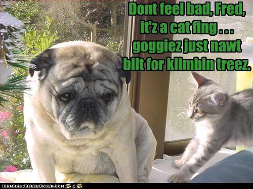cat,climb,climbing,comforting,depressed,feel bad,friend,help,helpful,pug,Sad,there there,tree