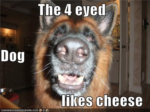 The 4 eyed Dog  likes cheese