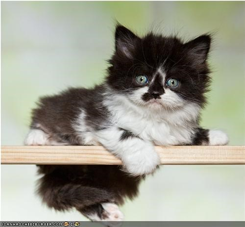 Cyoot Kitteh of teh Day: Balancing Act
