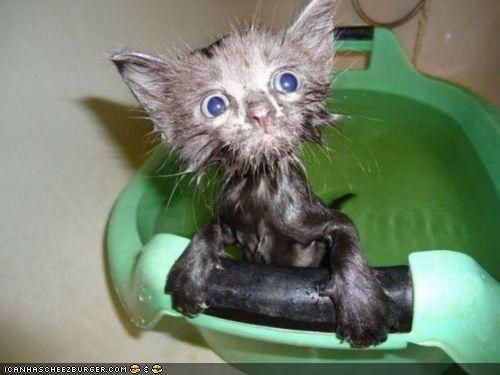 Cyoot Kitteh of teh Day: Baff Tiem Iz teh Wurst Tiem