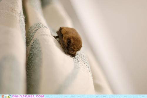 Creepicute: Itty Bitty Batty Baby