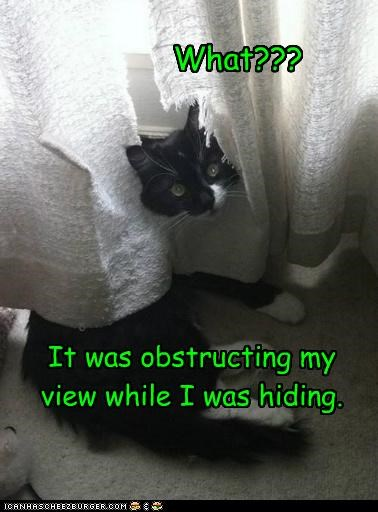 caption,captioned,cat,curtain,during,explanation,hiding,mess,obstructing,reason,ruined,tear,view,what,while