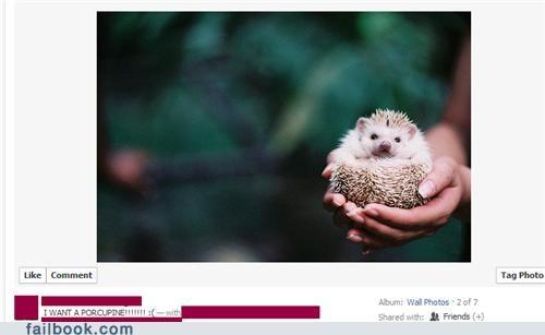 animals,hedghog,porcupine