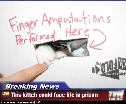 Breaking News - This kitteh could face life in prison