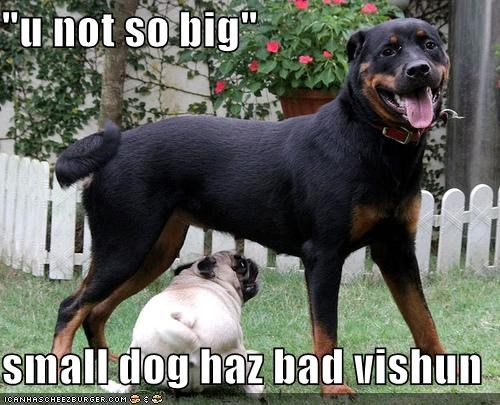 """u not so big""  small dog haz bad vishun"