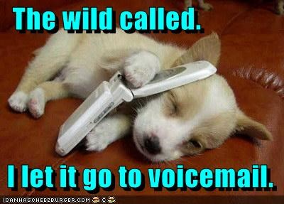 asleep,call of the wild,cell phone,phone,puppy,sleep,sleeping,the wild called,voicemail,wild