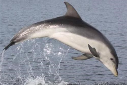 Newly-Discovered Dolphins of the Day