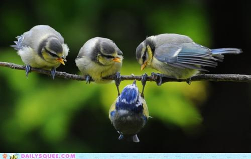 acting like animals,bird,birds,confused,dangling,defensive,Hall of Fame,hanging,Staring,upset,upside down