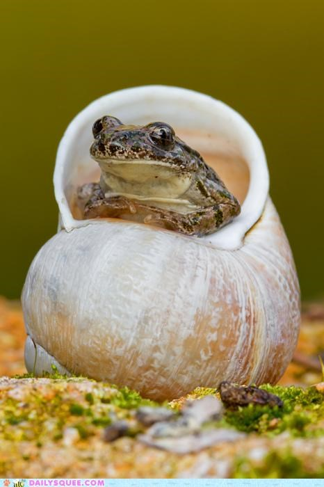 acting like animals,elder,exchange,information,knowledge,noms,price,prophet,shell,toad,wisdom