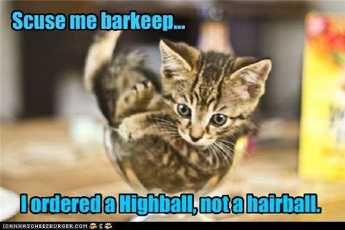 barkeep,caption,captioned,cat,confusion misinterpretation,excuse me,glass,hairball,highball,kitten,order,ordered