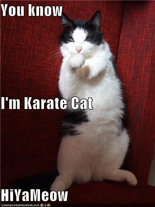You know I'm Karate Cat HiYaMeow