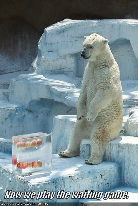 bear,caption,captioned,game,now,patient,play,polar bear,waiting,we