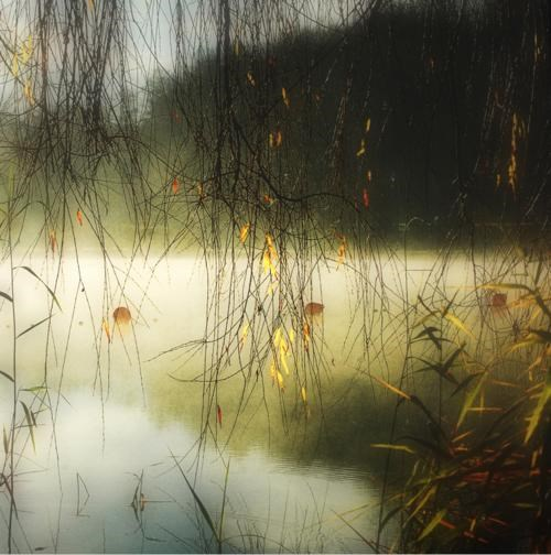 dawn,gold,mist,morning,pond,trees,unknown location,user submitted,water