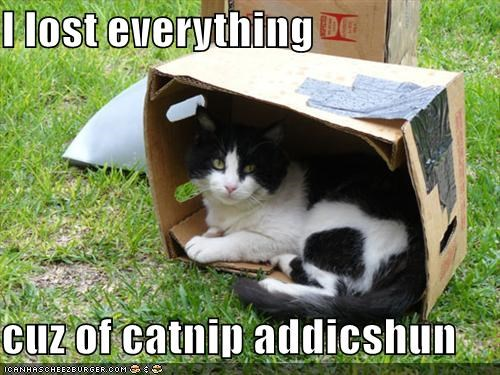 I lost everything  cuz of catnip addicshun
