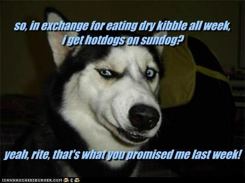 so, in exchange for eating dry kibble all week,  i get hotdogs on sundog?         yeah, rite, that's what you promised me last week!