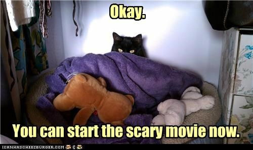 afraid,basement cat,best of the week,can,caption,captioned,cat,Hall of Fame,Movie,now,Okay,permission,prepared,scary,start,you