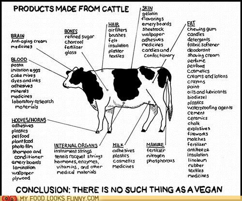cattle,diagram,everything,products