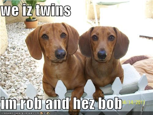 we iz twins  im rob and hez bob