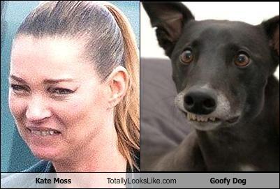 animals,dogs,goofy,Kate Moss,model,teeth