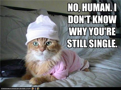 caption,captioned,cat,costume,denial,dont-know,dressed up,lying,no,single,still,why