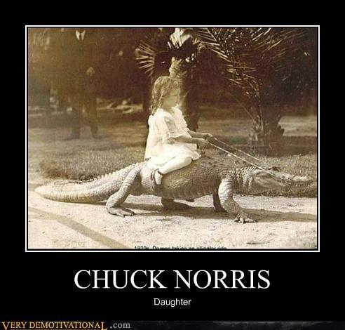 alligator,chuck norris,hilarious,kid
