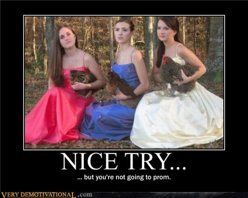 chickens,girls,hilarious,prom
