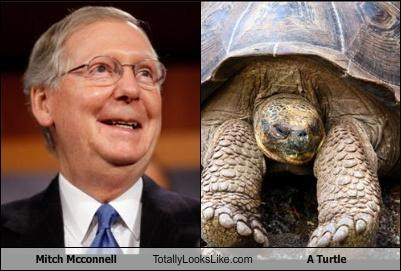 Mitch Mcconnell Totally Looks Like A Turtle
