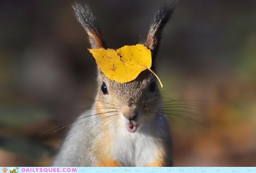 acting like animals,bragging,excited,expensive,fashion,hat,haute couture,High Fashion,jealousy,showing off,squirrel,swagger