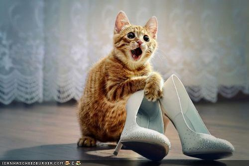 cyoot kitteh of teh day,excited,high heels,mouth open,omg,shoes