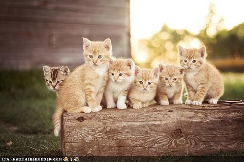 cyoot kitteh of teh day,log,lots of cats,outdoors,sun,sunrise,wood