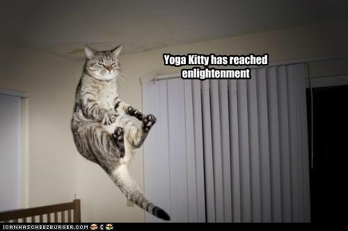 Yoga Kitty has reached enlightenment