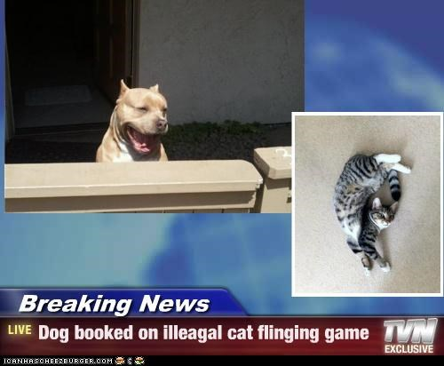 Breaking News - Dog booked on illeagal cat flinging game