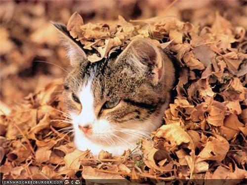 20 Cats Enjoying Fall Foliage