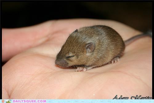 Squee Spree: Shrews Vs. Voles!