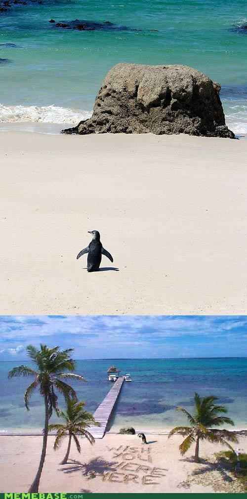 Awkwardly Adventurous Penguin