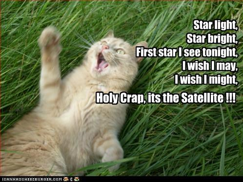 afraid,best of the week,bright,caption,captioned,cat,do not want,fear,first,Hall of Fame,light,may,might,nursery rhyme,satellite,star,tabby,tonight,twist,wish