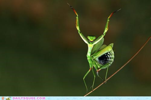 acting like animals,Awkward,caught,confession,FAIL,lie,mantis,nhot,pray,prayer,praying,praying mantis,truth