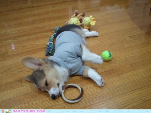 adorable,asleep,baby,corgi,dawww,oneupsmanship,pajamas,peaceful,puppy,serene,sleeping,touching,unbearably squee