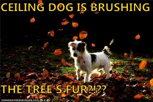 CEILING DOG IS BRUSHING  THE TREE'S FUR?!??
