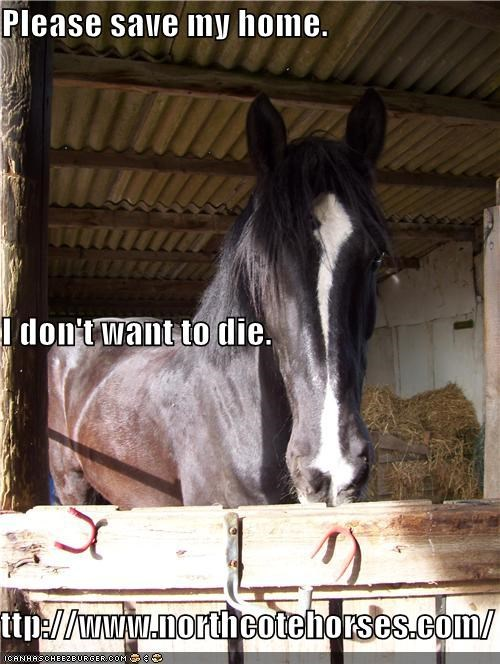 Please save my home. I don't want to die. http://www.northcotehorses.com/