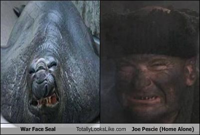 War Face Seal Totally Looks Like Joe Pescie (Home Alone)