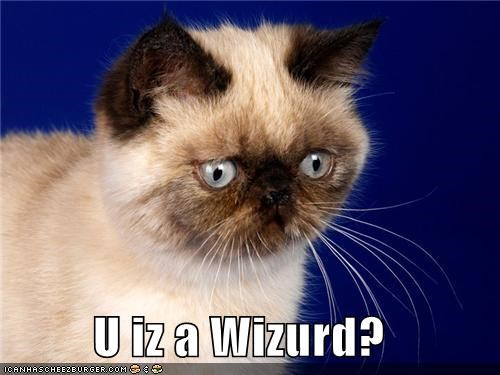animals,Cats,confused,derp,Harry Potter,I Can Has Cheezburger,wizards,youre-a-wizard