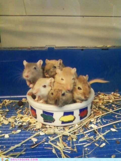 Babies,baby,ball,bundle,bundled,cuddling,hamster,hamsters,reader squees