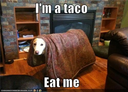 You're Spilling Out All of Your Delicious Contents, You Stupid Upside-Down Taco!