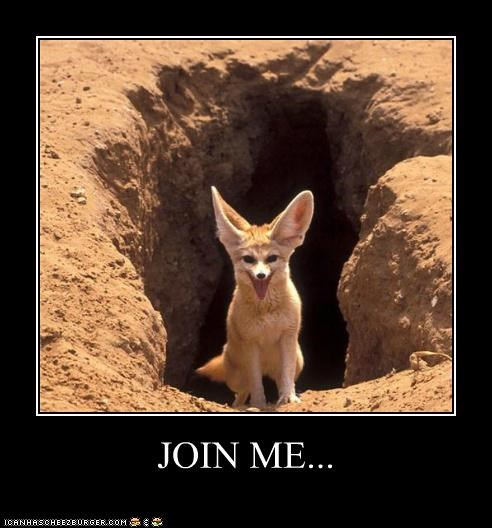 caves,creepy,crevice,fennec foxes,follow me,foxes,I Can Has Cheezburger,join me,pit