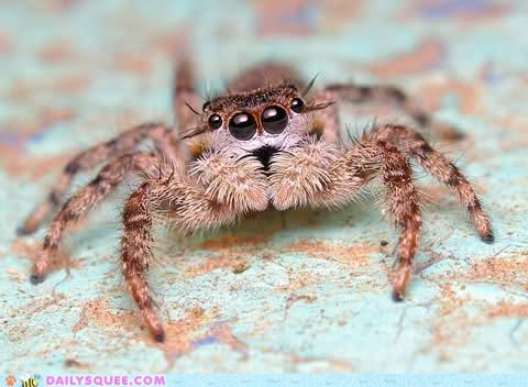 Cute little spider