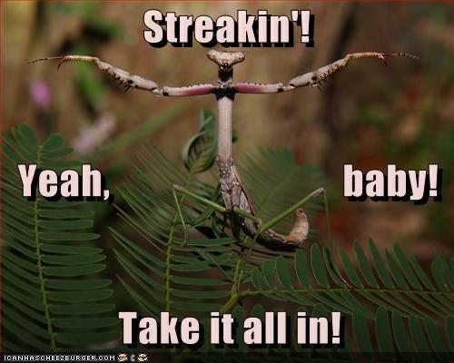 Streakin'!