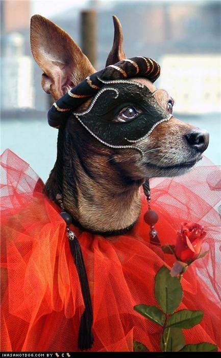 Dogtober 2011: Masquerade Mutt