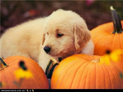 Dogtober 2011: Pumpkin Jungle